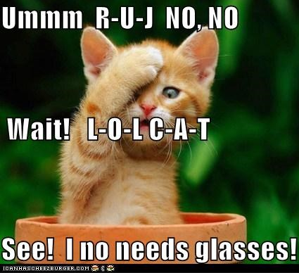 cat no needz glasses